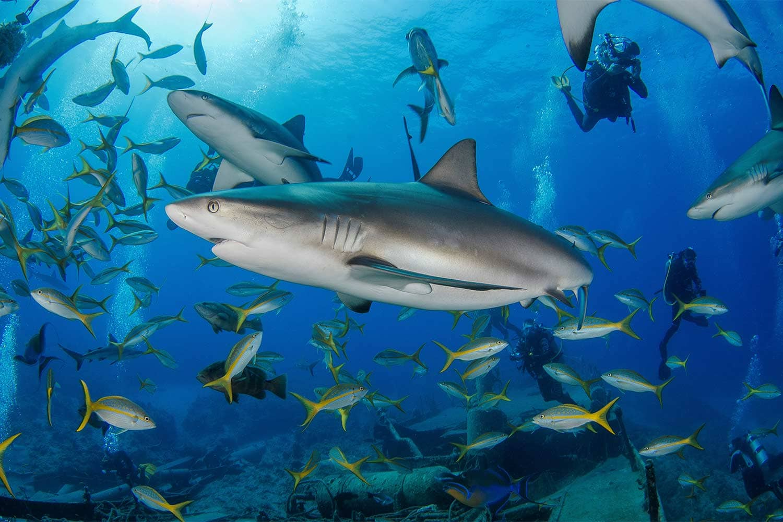 arribada-sharks-on-austin