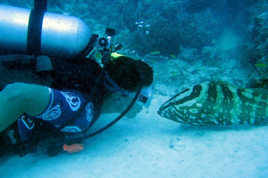 diver-grouper