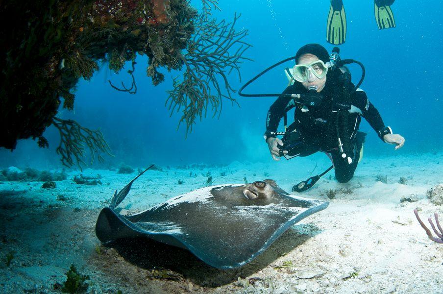 diver-stingray