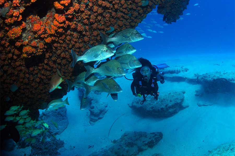 Wreck Diving in the BVIs