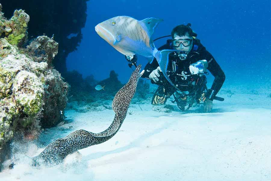 Bahamas Liveaboard diving experiences