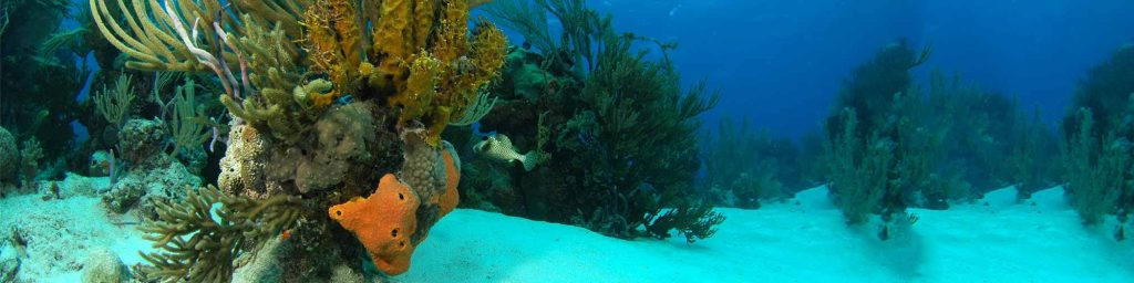 Marine Conservation is up to all of us, and the citizen Scientist trips is the perfect way to help