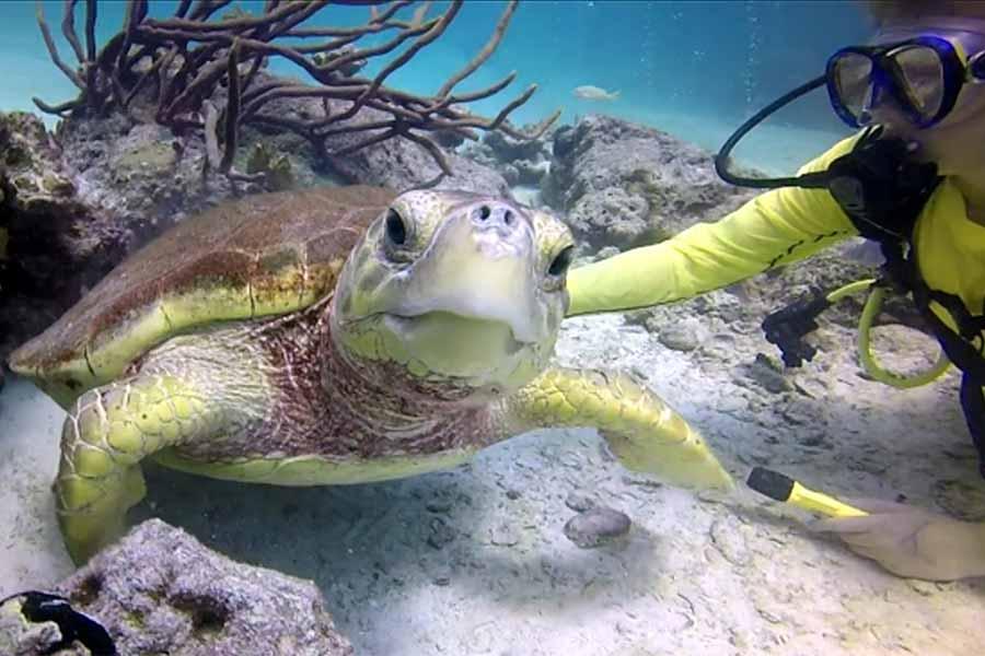 Scuba Diving in the Exuma Cays, Bahamas