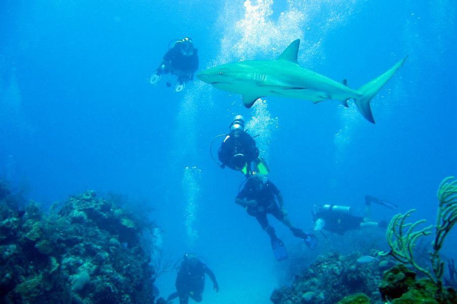 sharks07