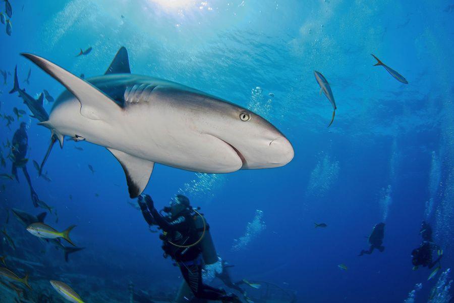 sharks09