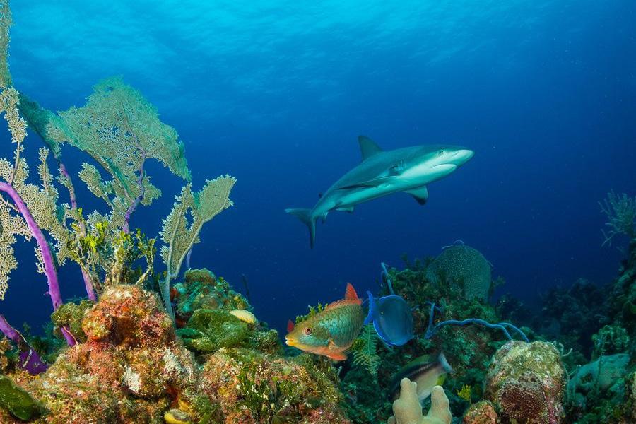 sharks10