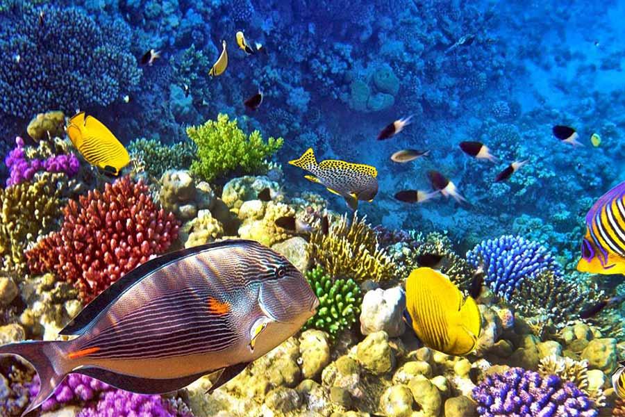 Scuba diving in Indonesia
