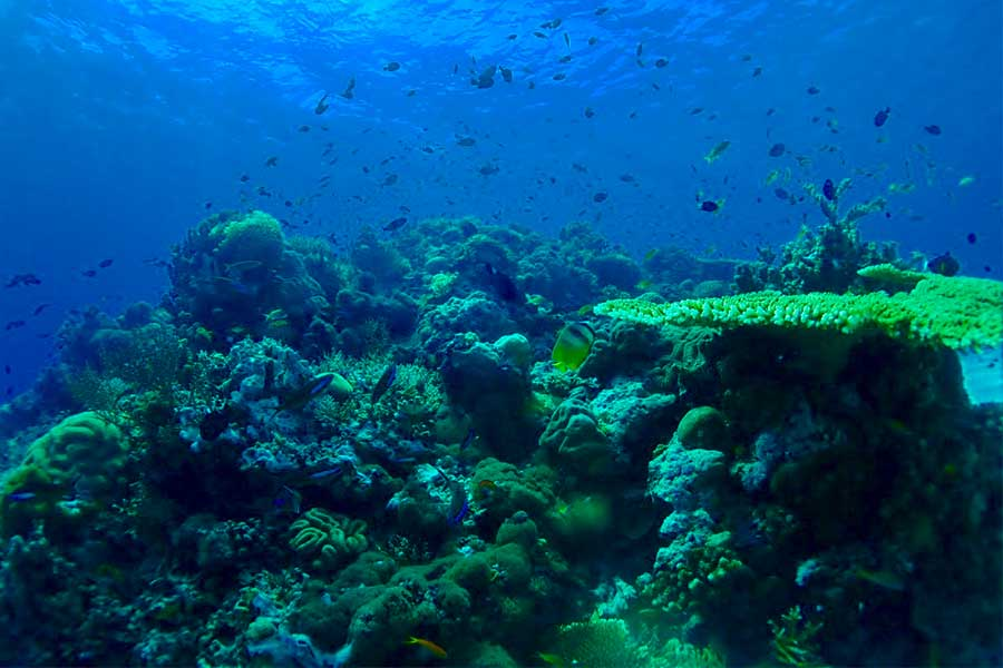 The fast flowing waters of The Philippines are the home of abundant fish and many species of coral