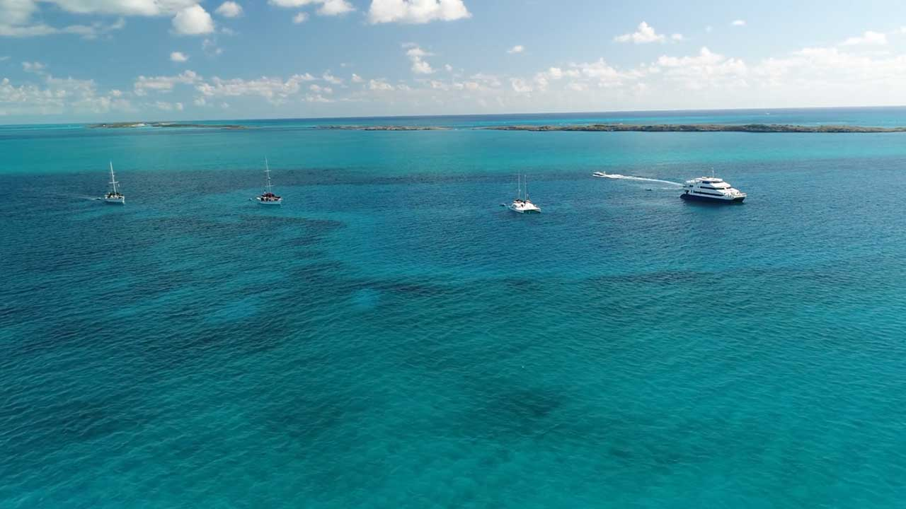 The All Star Liveaboard's Bahamas dive liveaboards. On the left the 2 Blackbeard's sailboats, the charter yacht Cat Ppalu and the dive liveaboard Aqua Cat .