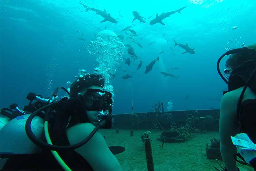 scuba-diving-scouts-gallery03.jpg