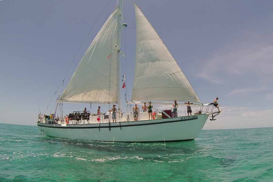 Scuba diving scouts at sail.
