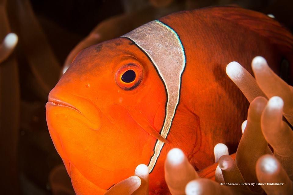 Anemonefish,Komodo,Clownfish,Nemo