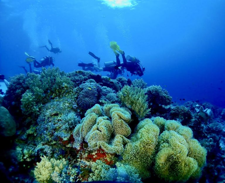 Divers can see for themselves - the diversity in fish species and coral in The Philippines