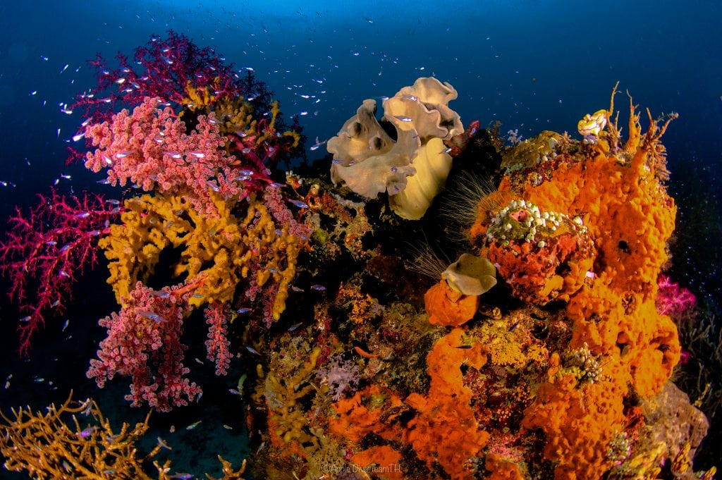 Soft coral garden in raja ampat, misool, indonesia aboard dive liveaboard Velocean