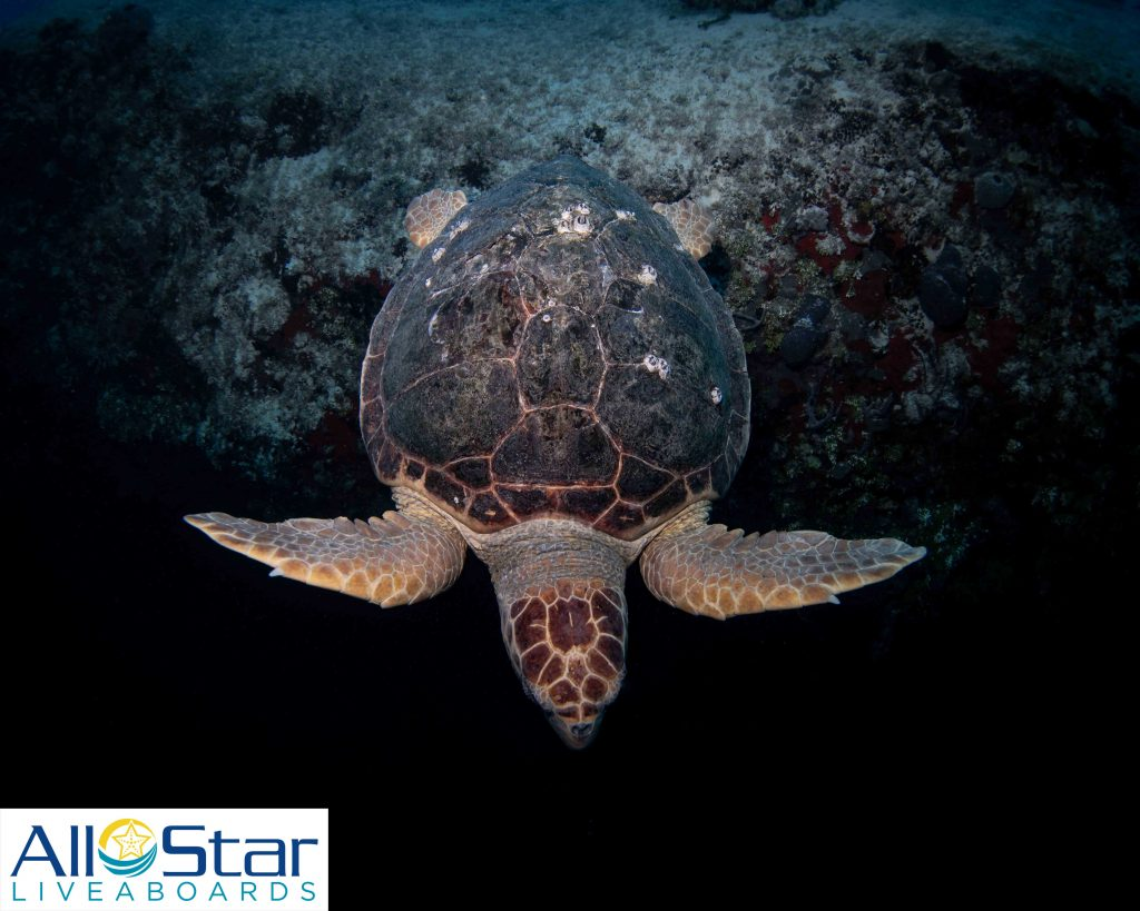 Turtle in Exuma Cays, Bahamas
