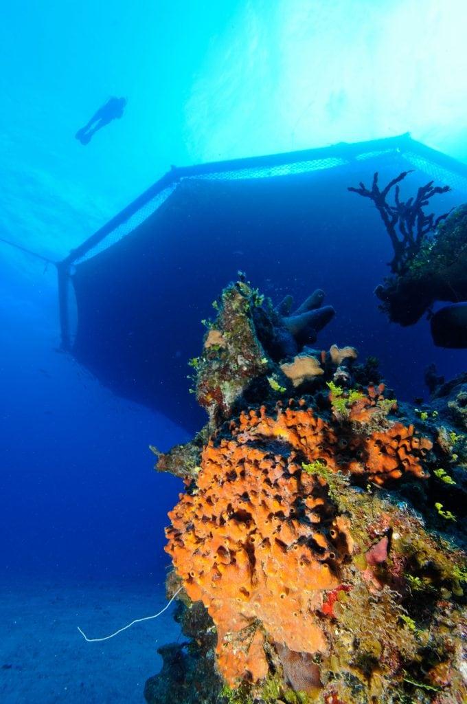 Cobia Cage Dive Site off Eleuthera, Bahamas