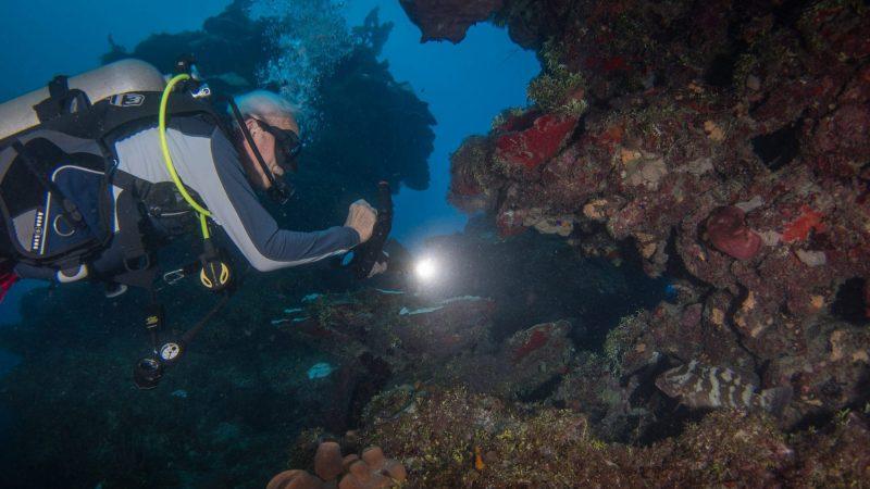 Underwater photography Nassau Grouper Exuma Cays, Bahamas
