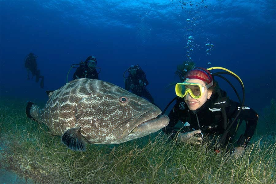 Diver posing with a black grouper in Cuba's Jardines de la Reina (Gardens of the Queen).