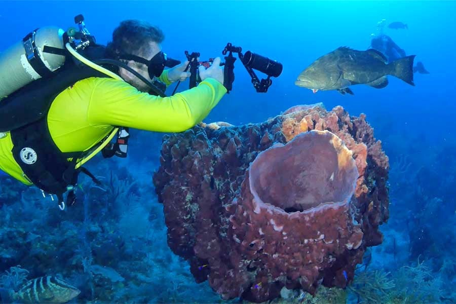 Diver off the Cuban dive liveaboard All Star Avalon II taking a picture of a black grouper