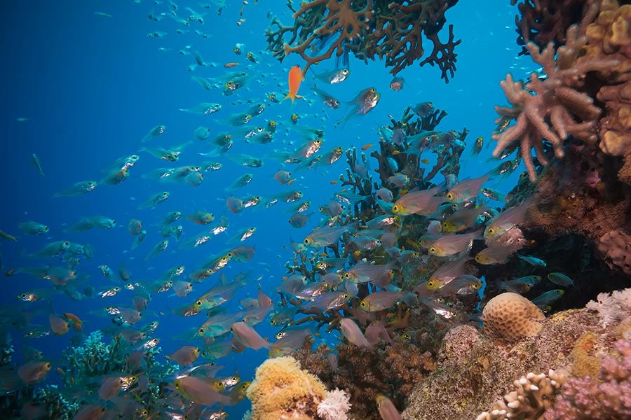 574 species of coral and 1,400 species of fish can be found in the Coral Sea