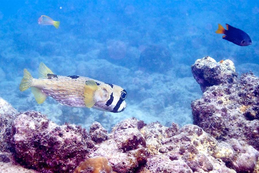 The Philippine is home to 574 species of reef building corals