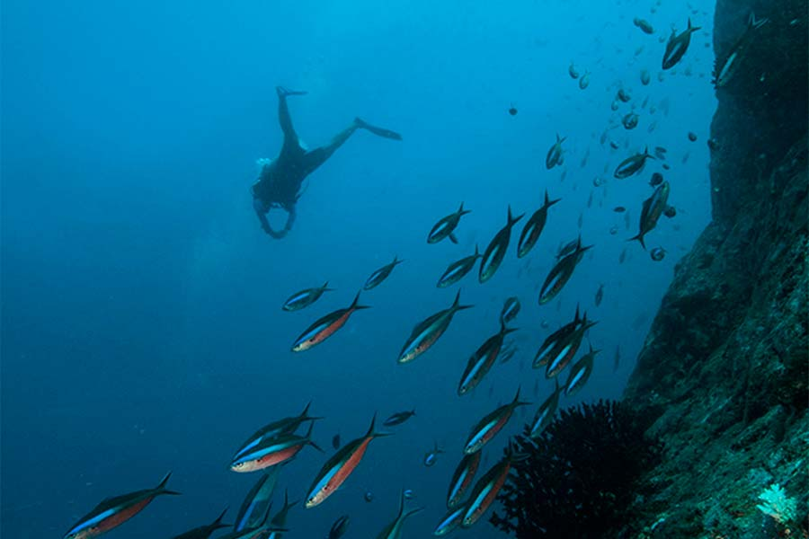 The Coral Sea is home to 1,400 species of fish