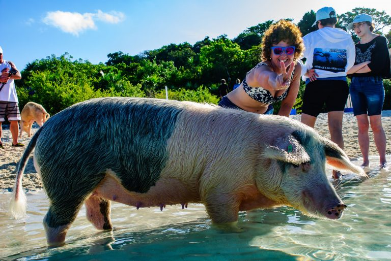 An Aqua Cat passenger visiting the swimming pigs of the Bahamas on a shore excursion